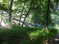 Csákberény 2005.06.25. :: A Csákberény körüli erdőben túráztunk. Kellemes időtöltés, szép helyek. Kezdő turistáknak tudom ajánlani.