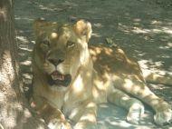 Szeged vadaspark :: Újra meglátogattuk a szegedi vadasparkot-